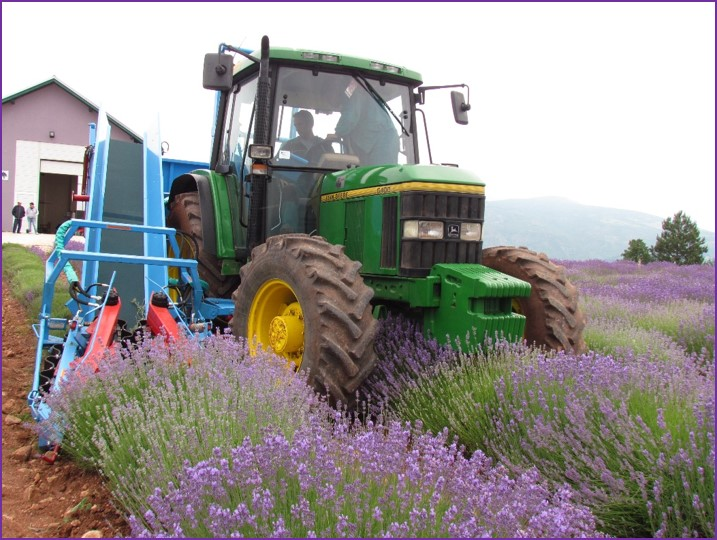 Lavender harvesting machine
